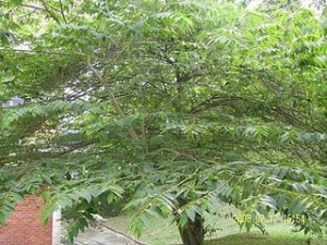 pohon2